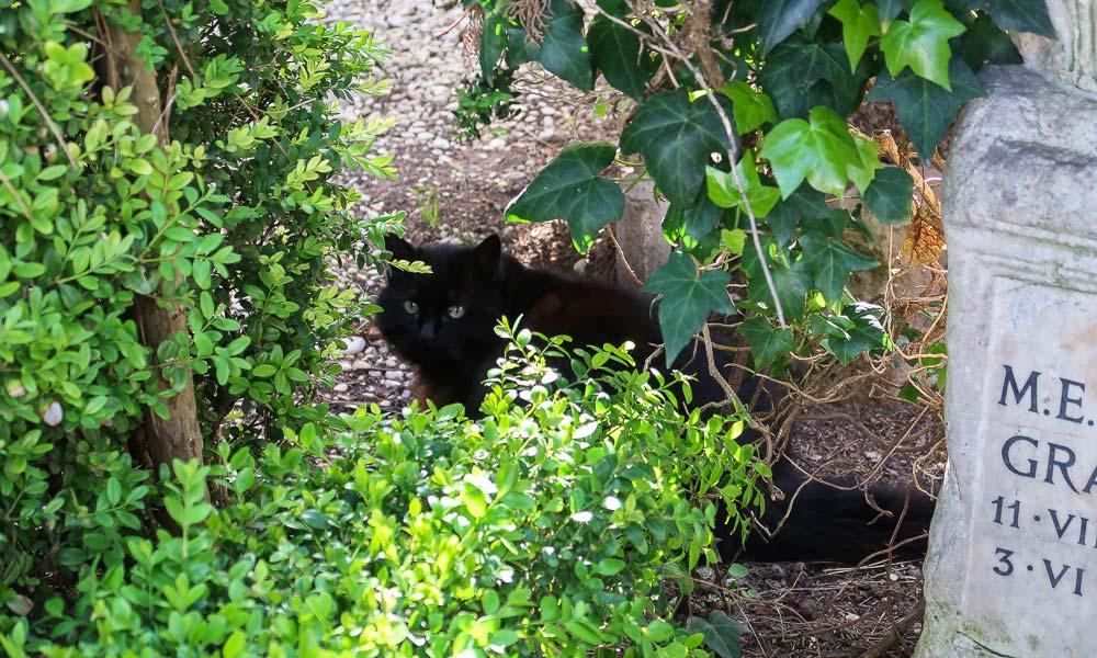 Schwarze Katze am Grabstein