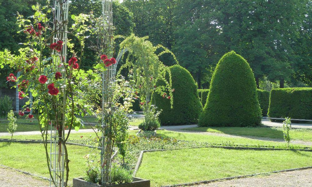 Rosenranken und Buchsbaumbüsche