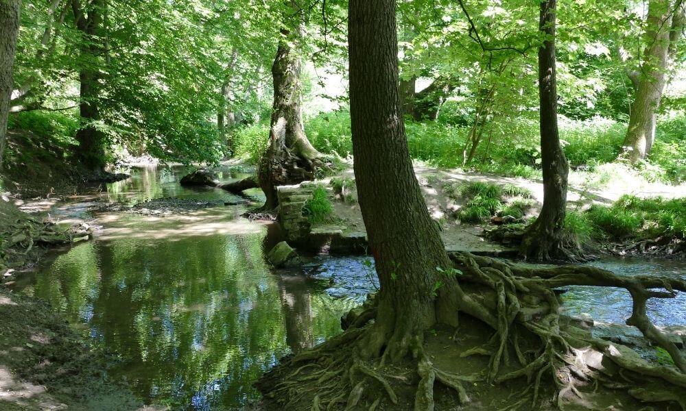 Fluss im Wald des Neandertals