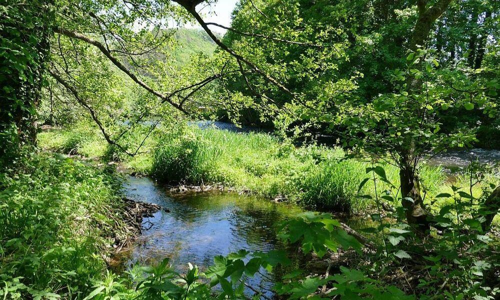 Naturbelassener Fluss
