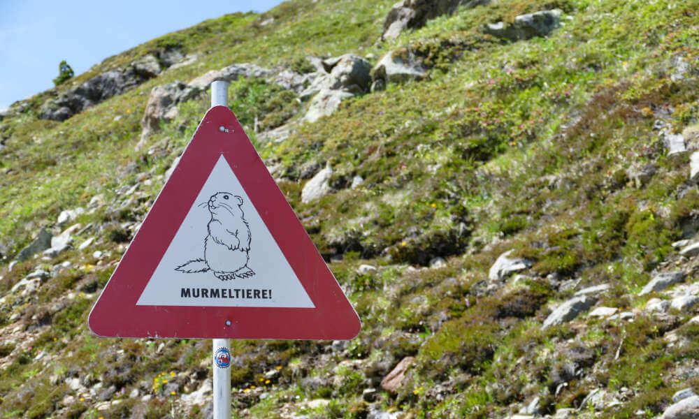 Schild mit Murmeltier