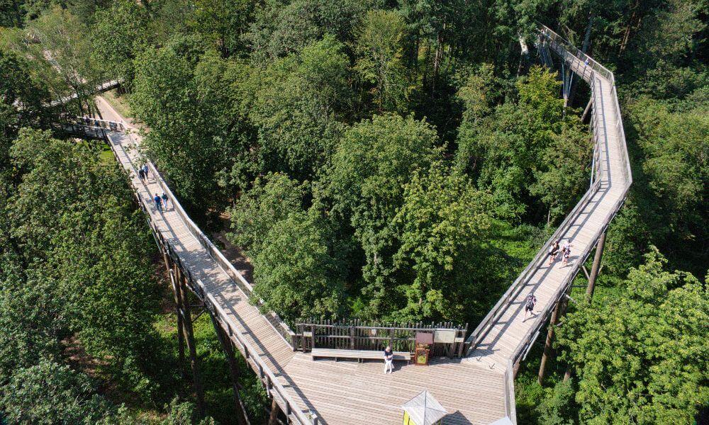 Holzweg im Wald von oben